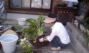 花の鉢入れ替え